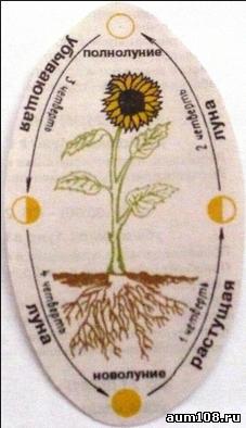 календарь сбора лекарственных трав