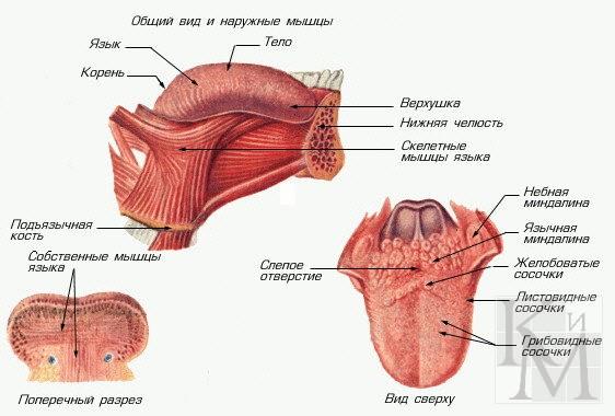 массаж отдельных частей тела часть 2